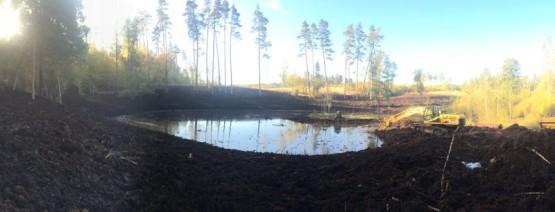 Budowa obiektów hydrotechnicznych w ostojach żółwia błotnego.